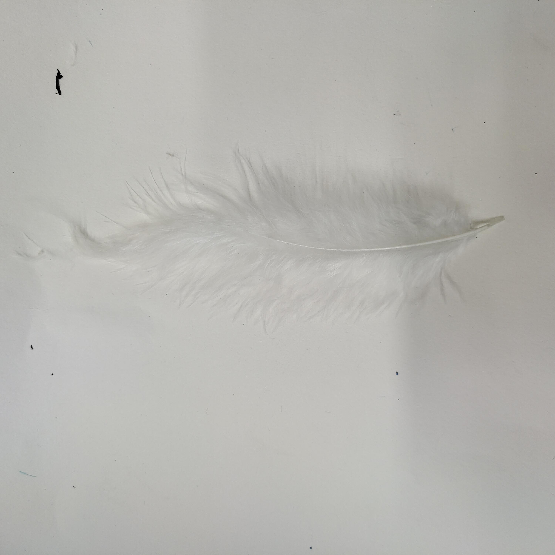 火鸡羽毛尖尾绒白色