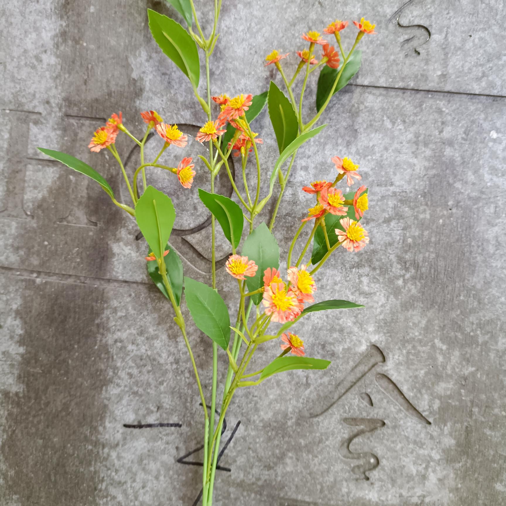 橙色长枝洋甘菊