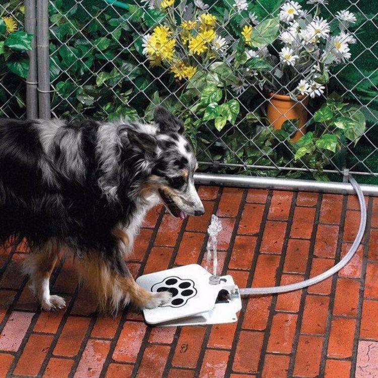 新奇宠物用品 宠物自动饮水器 狗狗踩踏式喝水机 狗狗喂水器