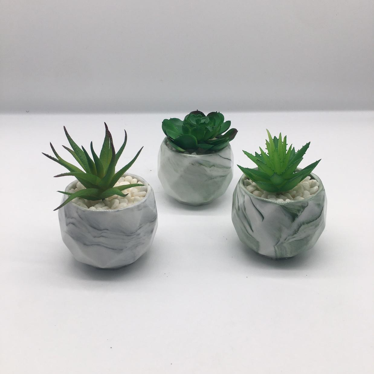 陶瓷多肉花盆大理石纹含植物