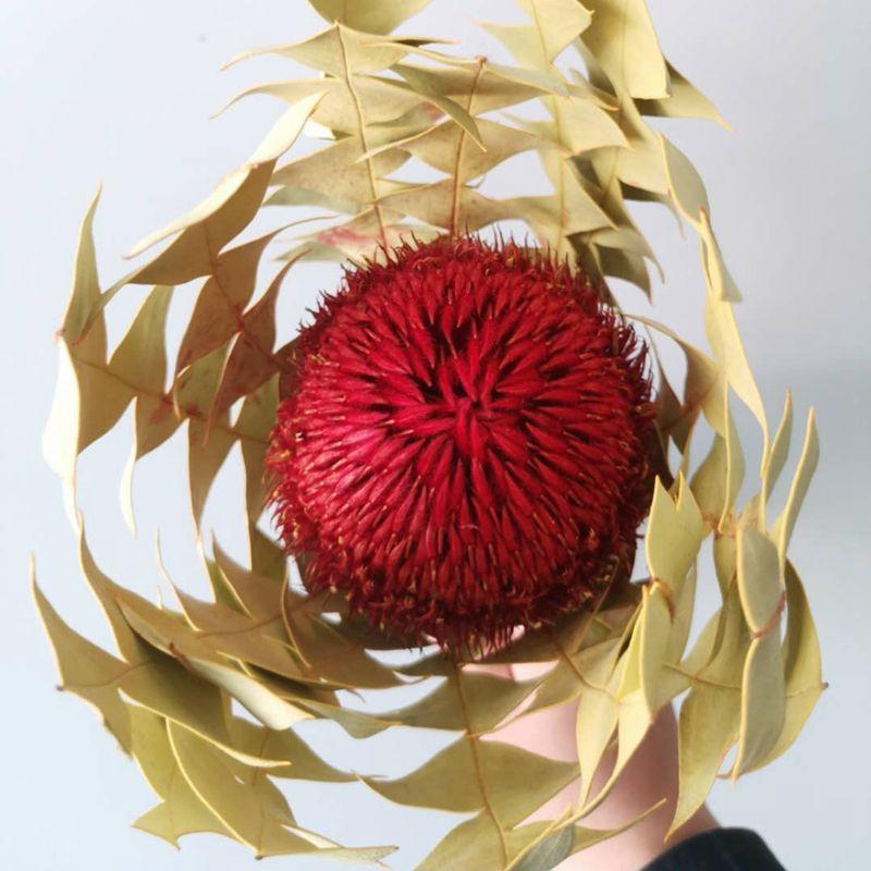 纯天然植物进口产品班克木圆形