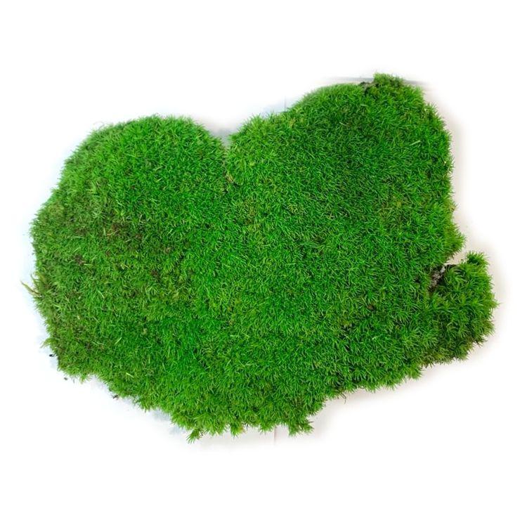 纯天然植物干花白发苔藓