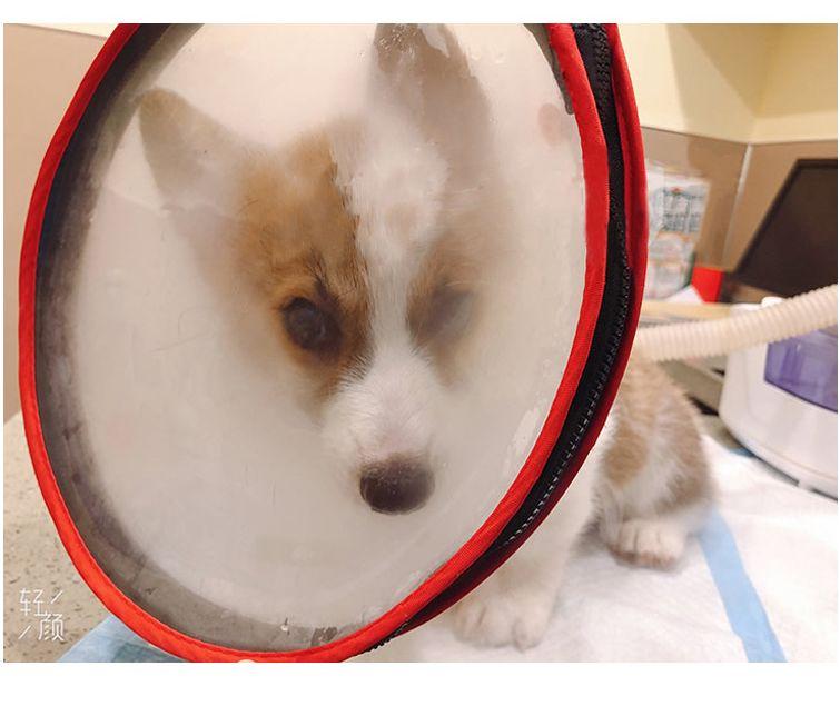 新款宠物雾化罩猫狗吸氧面罩防护防抓咬伊丽莎白圈清洁医疗用品